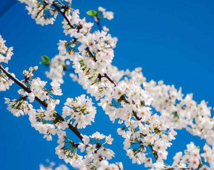 春の声(ヨハン・シュトラウス)