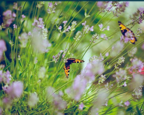 シューマン 交響曲第1番『春』