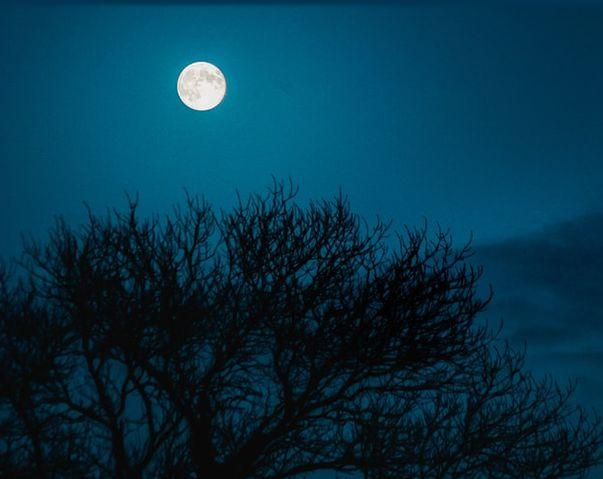 ベートーヴェン ピアノ・ソナタ『悲愴』『月光』『熱情』他